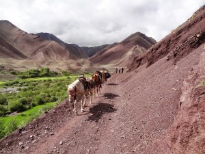 trek himalaya ladakh markha filles autonomie inde Trek au ladakh - / www.pasquedescollant.com